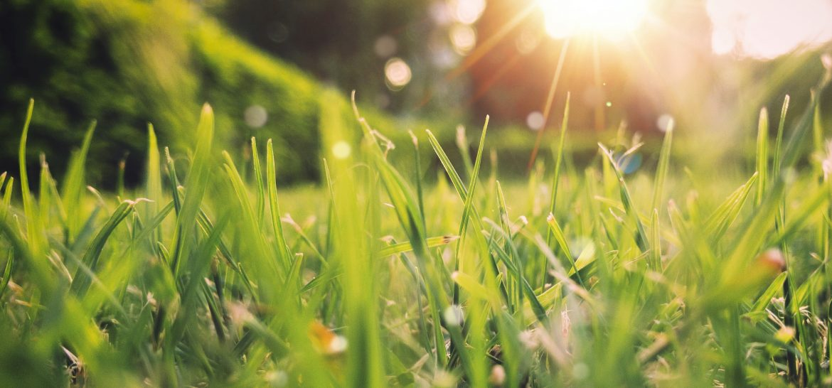 A healthy lawn with sunshine in the background