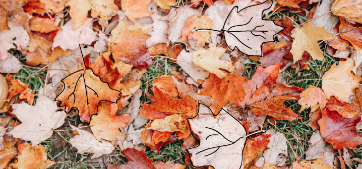 A fall lawn covered in leaves