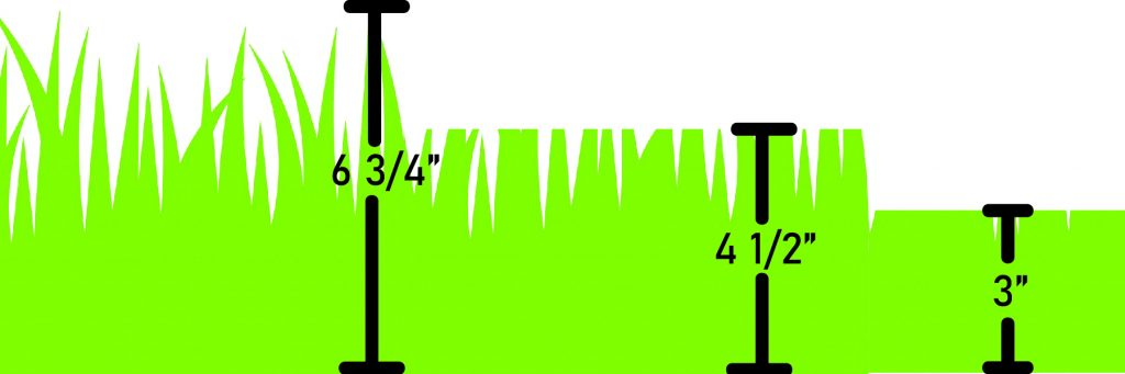 A graphic displaying the 1/3 rule.  the first time you mow the lawn, it is likely overgrown (6.75 inches) so you cut it down to 4.5 inches then finally 3 inches the following weeks.