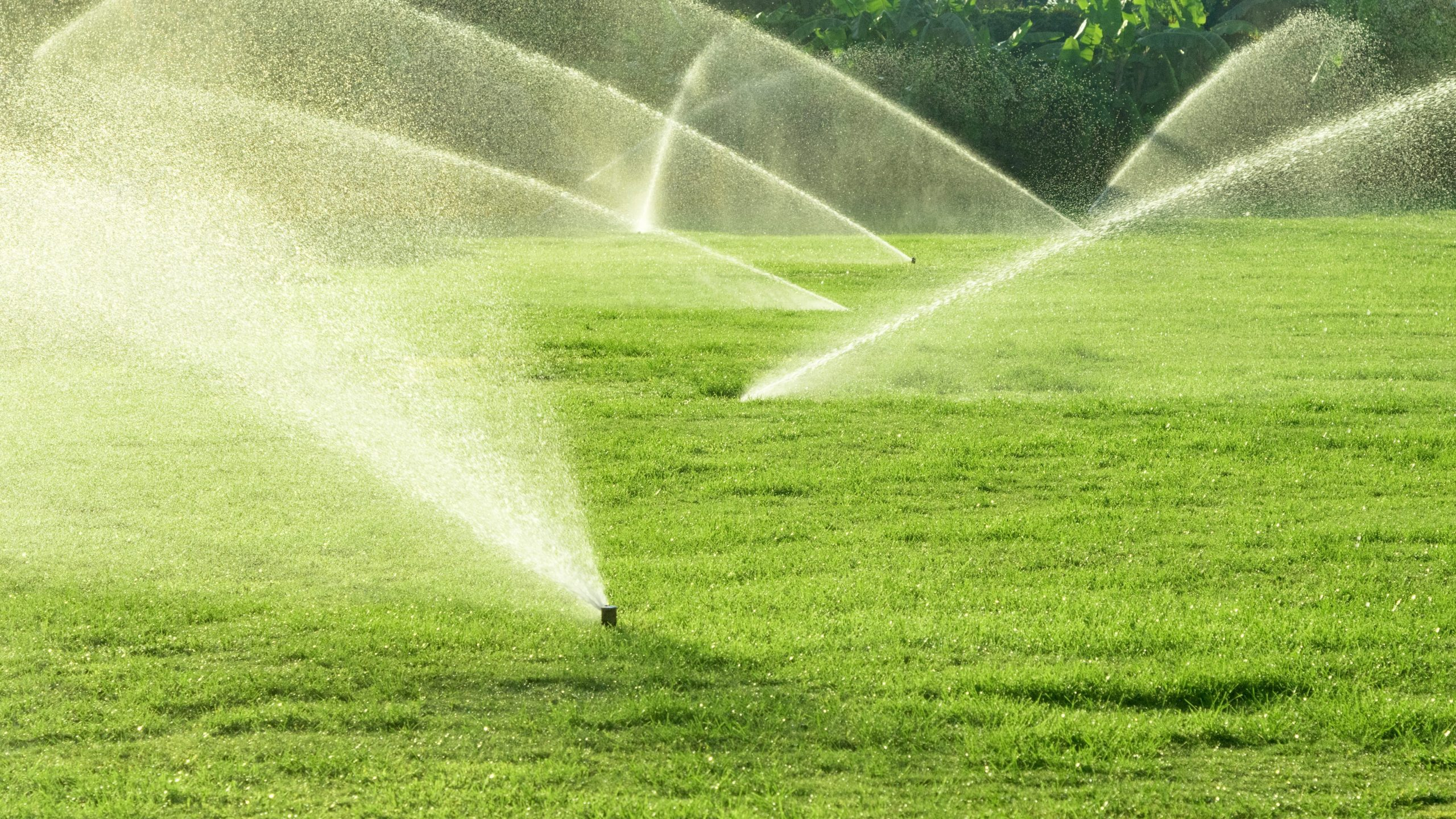 Sprinkler irrigation system watering the lawn.